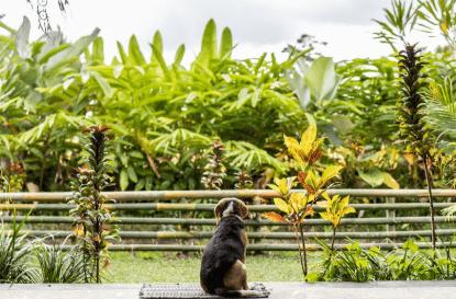 【飼い主と犬の絆】映画「僕のワンダフル・ライフ」あらすじ&ネタバレ感想