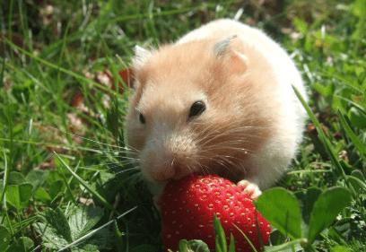 【ネズミが活躍する冒険ファンタジー】映画「マウス・タウン ロディとリタの大冒険」あらすじと見どころ、感想